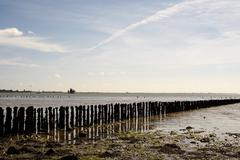 Worn wooden sea defence posts at cudmore grove on mersea island in England wi Kuvituskuvat