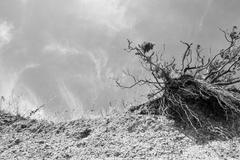 Crumbling sea front beach cliff due to erosion fro the sea with a single tree Stock Photos