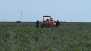 Workers load pumpkins onto a trailer in a Texas field. 4K Stock Footage