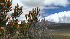 Wild Brush in Front of Cotopaxi Blowing in the Wind Stock Footage