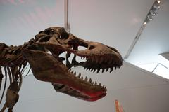 Tyrannosaurus rex skeleton at the ROM in Toronto Kuvituskuvat