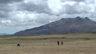 Wild Horses on the Plain Stock Footage