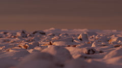 Rack focus across snow capped boulder field at sunset light Stock Footage