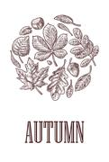 Poster AUTUMN with set leaf and acorn. Vector vintage engraved illustration.  Stock Illustration