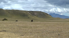 Wild Horses Watch volcanic zone near Quito Ecuador  Stock Footage