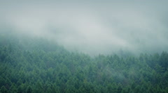 Dramatic Misty Forest Landscape Stock Footage