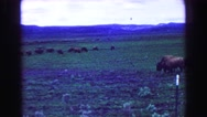 1968: observing some wild game while enjoying the backdrop of mountains Stock Footage
