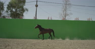 Horse trotting in front of a green screen in slow motion Stock Footage