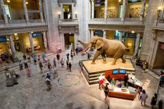 National Museum of Natural History in Washington D.C. Stock Photos