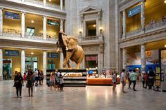 National Museum of Natural History in Washington D.C. Kuvituskuvat