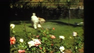 1968: doggy plays with water sprinkler in the front yard while mother watches Stock Footage