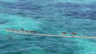 Grey seagull swing on crossbar in Red Sea Stock Footage