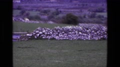 1969: admiring the architecture of stone walls separating the fields. ENGLAND Stock Footage