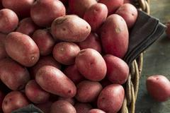 Raw Organic Red Potatoes Stock Photos