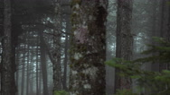 Pov driving passing by forest mountain pine trees surrounded in mist and fog Stock Footage