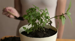 Putting dirt into flowerpot with sprout Stock Footage