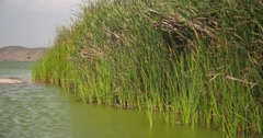 Lagoon with water reed in desert of PERU, South America Stock Footage