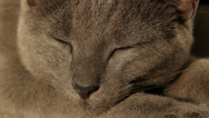 Muzzle gray cat close-up Stock Footage
