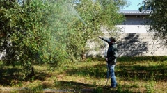 Farmer giving pesticide to prevent olive fly Stock Footage
