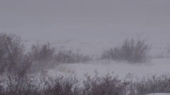 Polar bear half buried in snow in arctic blizzard - slow motion Stock Footage