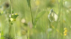 White butterfly on grass in morning sunlight Stock Footage
