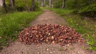 Autumn leaves falling on the leaves pile Stock Footage