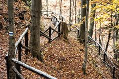 Hiking path with railing in the autumn deciduous forest, tourism theme Kuvituskuvat