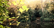 English Woodland: Autumnal pond in forest; pan Stock Footage