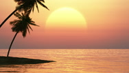 Palm trees on a background of tropical sunset Stock Footage