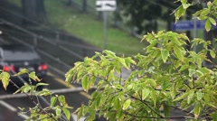 Closeup of branch blowing on the wind, with traffic moving on background Stock Footage