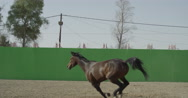 Horse galloping close to the camera in front of a green screen in slow motion Stock Footage