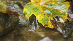 Yellow leafe on stone in river flow Stock Footage