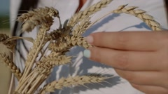 Ripe ears wheat in woman hands against a background of wheat field Arkistovideo