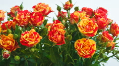 Bouquet of yellow and red roses small roses. they are swaying in the wind Stock Footage