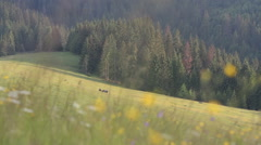 Horses in mountains with colorfull background Stock Footage