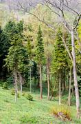 Pine Tree Forrest in the Mountains Stock Photos