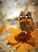 Butterfly On An Orange Flower Stock Illustration