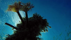 Anemone on an old abandoned fishing net the bottom of the Aegean Sea in Greece Stock Footage