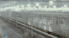Rabbit farm. rabbit breeding Stock Footage