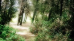 Woods POV flashback run short Arkistovideo