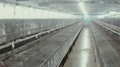 Industrial rabbit farm Stock Footage
