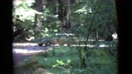 1968: slow moving sedan on the road flanked by giant trees COTTONWOOD, ARIZONA Stock Footage