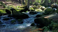 River in the forest with stones - sunny day  Stock Footage