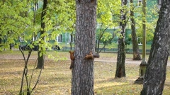 Funny squirrel playing in a tree in the Park Stock Footage