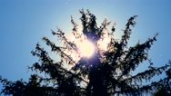 Sun rays shine through coniferous tree  Stock Footage