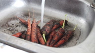 Wash the carrots in the sink. Stock Footage
