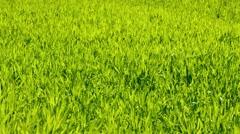 Green grass texture Stock Footage