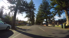 Vehicle POV driving along avenue lined with tall Norfolk Island Pine Trees Stock Footage