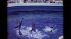 1968: sensational presentation in the aquatic park of dolphins  Stock Footage