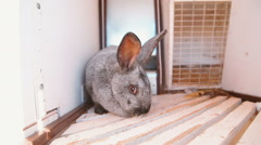 Grey rabbit sitting in a cage Stock Footage
